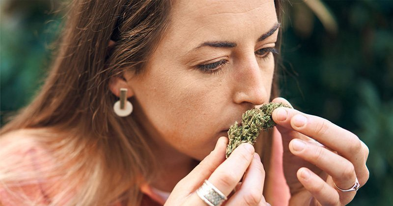 A woman smelling the dried flower of the cannabis plant