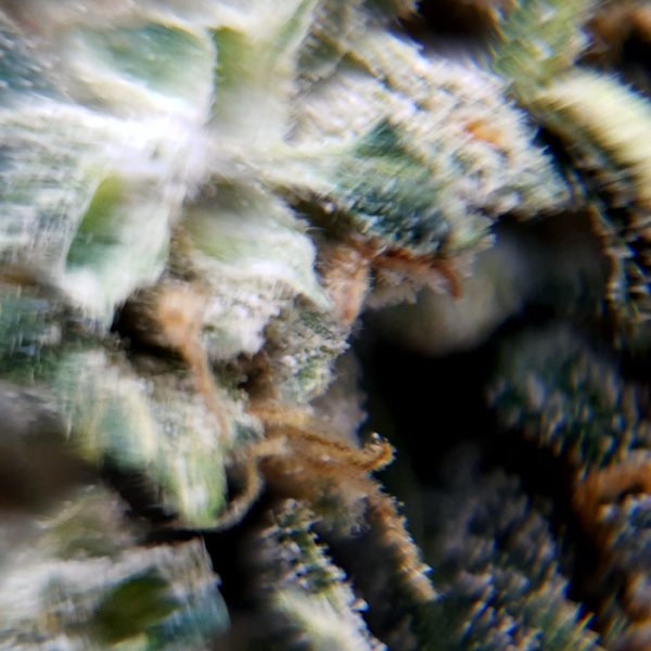 dispensr-cbd-flower-siesta-sidewinder-close-up-2