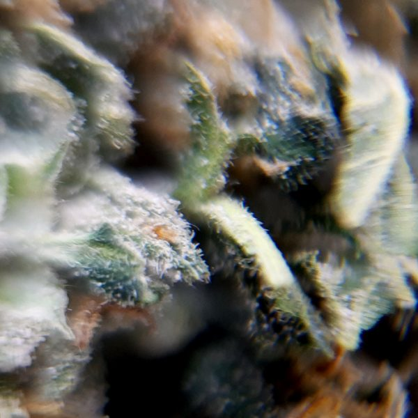 dispensr-cbd-flower-siesta-sidewinder-close-up